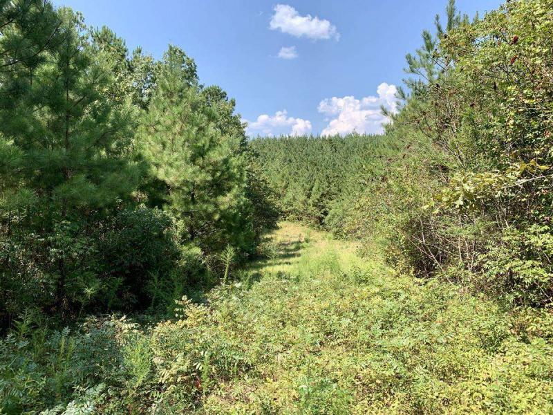 202 acres-Lamar County- Co Rd 77 Tract