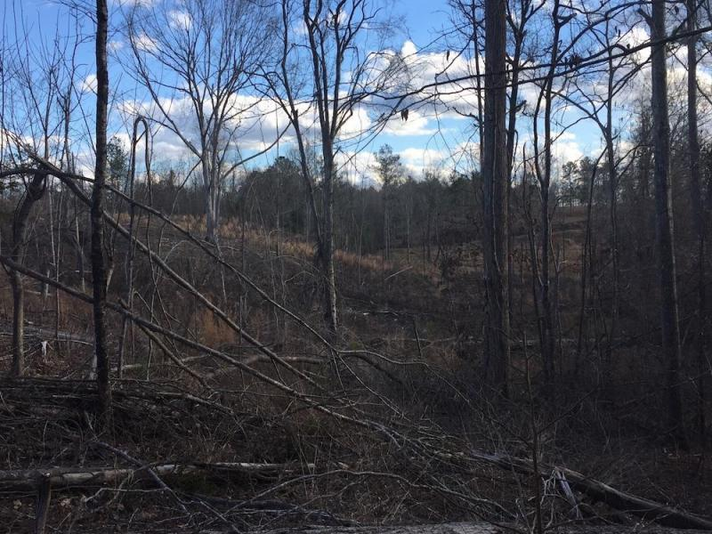 106 Acres-Lamar County- Mud Creek Tract (SOLD)