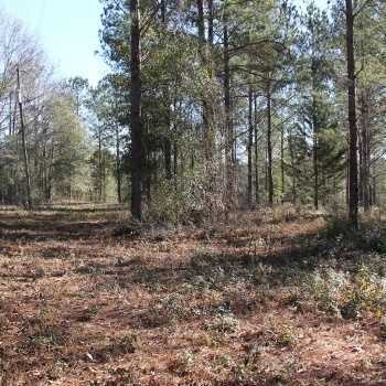Land for Sale in Alabama, Mississippi & Tennessee | Tutt Land Company